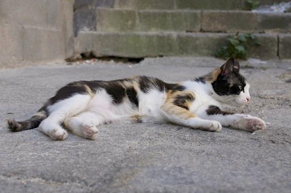 不同地区的猫,生活大不同