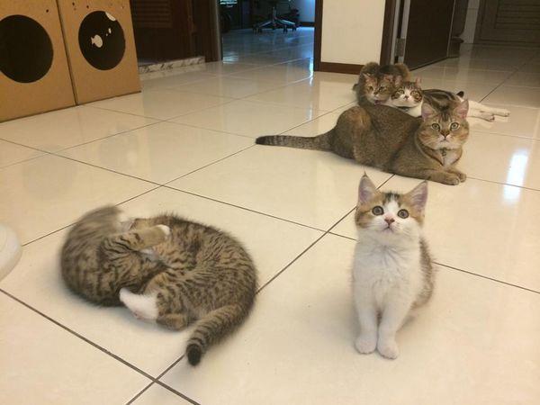 貓咬-圖004
