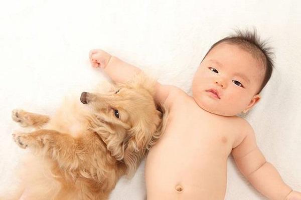 懷孕養寵物2.jpg