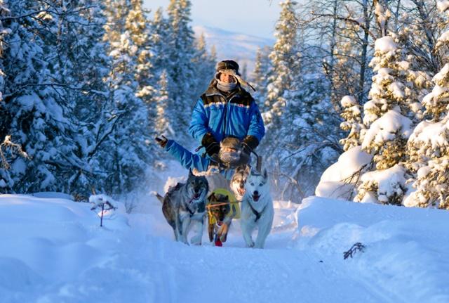 05.狗雪橇穿越冰樹枝隧道,這根本是童話故事中場景。.jpg