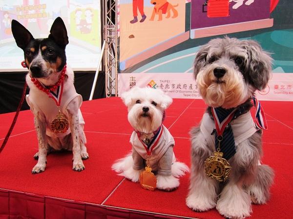左起狗醫生三丸, 波比, 埃寶.JPG