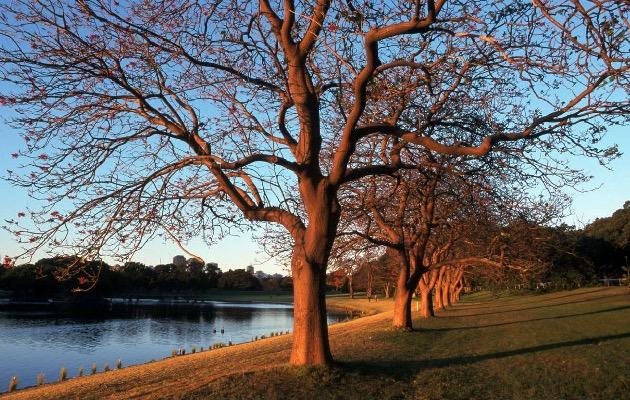 centennial-parklands-sydney2.jpg
