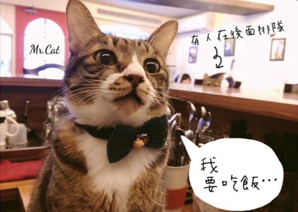 貓咪先生的朋友  店貓.png