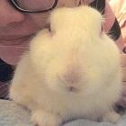 愛兔子的事