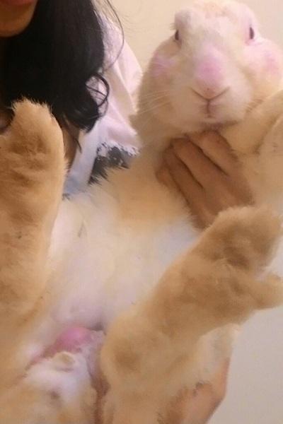 著文/愛兔子的事 01 小