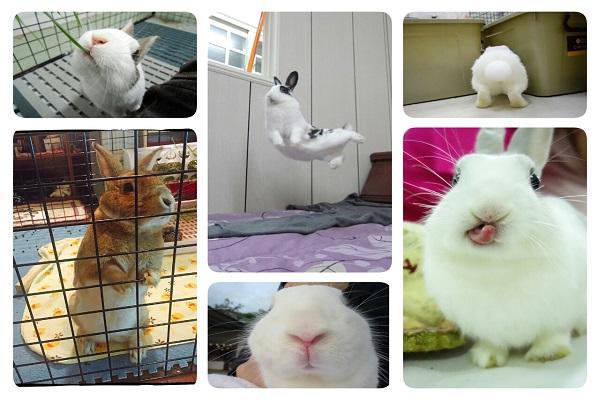 愛兔子的事 6 小