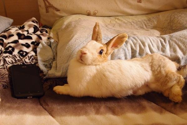 著文/愛兔子的事 06 小