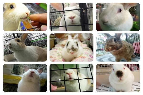 愛兔子的事 3 小