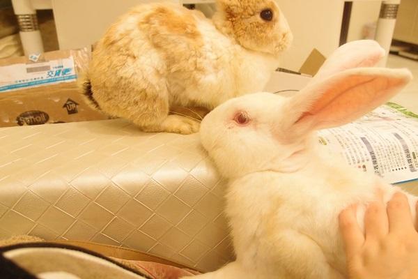 著文/愛兔子的事 05 小