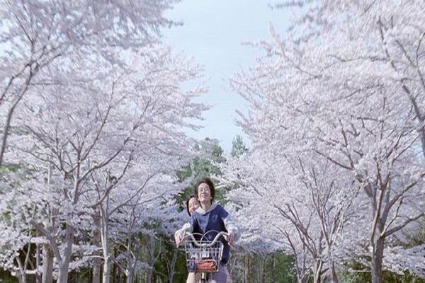 《海街日記》充滿櫻花與家的氣氛