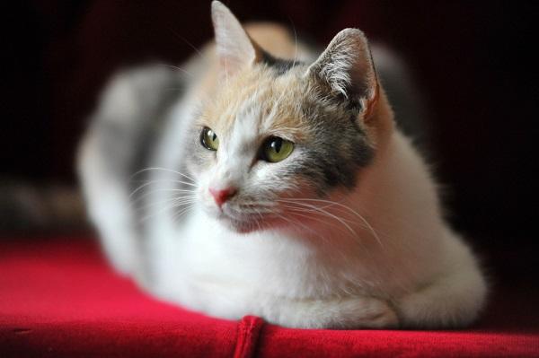 cat 01.jpg