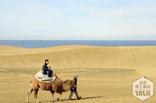 鳥取沙丘騎駱駝