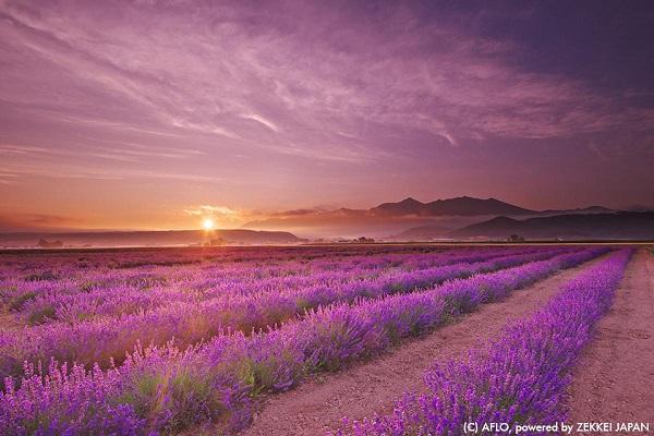 滿滿戀愛感的日本夏日風物詩 6.jpg