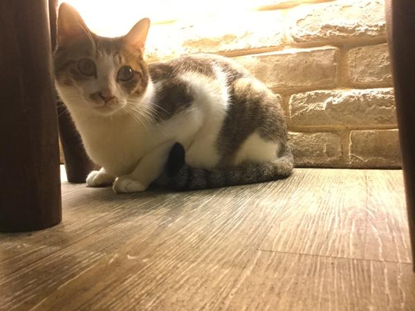 貓 (9).jpg
