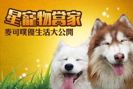 【我家也有毛明星】第二集:雪橇犬『麥可&噗優』