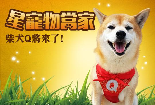 【壽司點點名】第七集:主持界網紅,柴犬Q將來了!